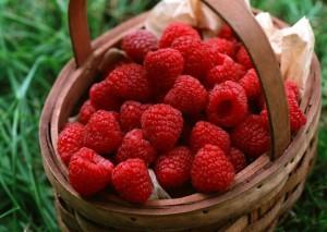 На фото - сбор урожая малины, liveinternet.ru