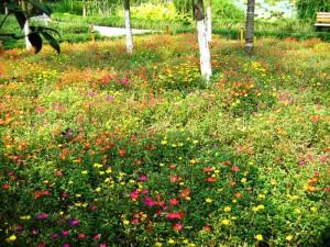 На фото - мавританский газон, 1landscapedesign.ru