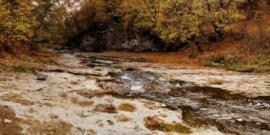 Фото бурых лесных почв