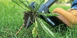 Какая газонная трава вытесняет сорняки – мечта каждого дачника