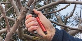 Правильная обрезка деревьев весной – делимся секретами!