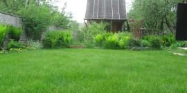 Посадка газона