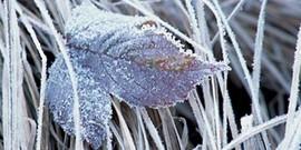 Работы в саду зимой