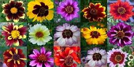 Как подготовить и посадить семена однолетних цветов – советы новичкам