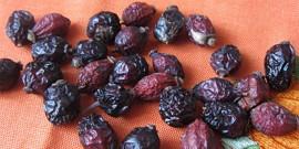 Шиповник – как сушить полезные плоды?