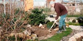 Видео о весенних работах в саду