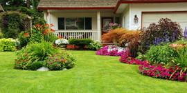 Виды газонов – выбираем вместе тип для вашего участка!