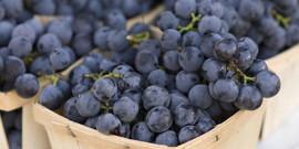 Виноград Изабелла – и вино, и сок, и ягоды