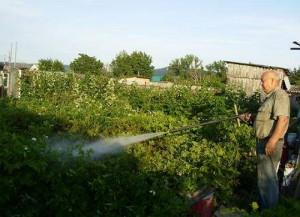 На фото - раствор для борьбы с колорадским жуком, pticedvor-koms.ucoz.ru