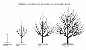 Весенняя обрезка плодовых деревьев – в чем выгода?