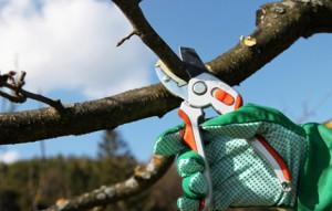 Садово-огородный ликбез – не жалеем дерево фото
