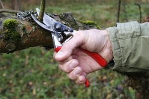 Сложна ли обрезка деревьев весной? фото