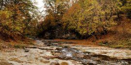 Бурые лесные почвы – изучаем вместе со специалистами