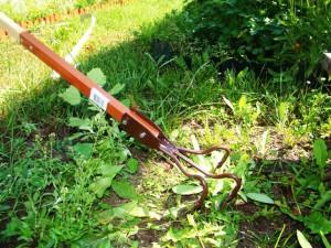 Фото борьбы с сорняками в огороде весной, mirsadovodnik.ru