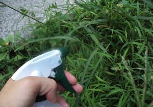 На фото - распыление химикатов против сорняков, kramelion.ru