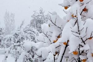На фото - уход за садом зимой, krassever.ru