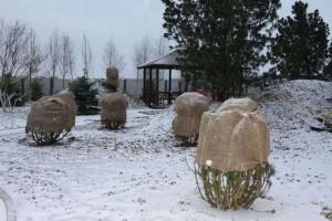 На фото - готовим сад к зиме, greeninfo.ru