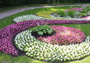 Фото клумб в саду, triino.ru