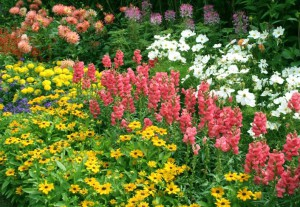 Фото цветущей клумбы, flowers.cveti-sadi.ru