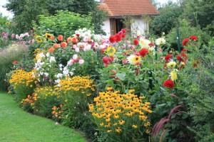 На фото - клумба из крупных цветов, vashsad.ua