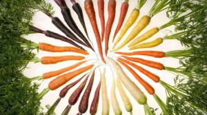 Морковь – лучшие семена и проверенные сорта