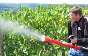 На фото - обработка винограда медным купоросом, megaogorod.com