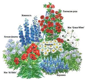 На фото - схема высадки цветов на клумбе, 1dacha-sad.com