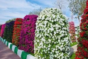 На фото - вертикальные клумбы, cvetivsamare.hobbyfm.ru