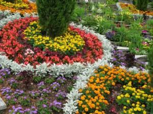 Фото клумбы непрерывного цветения, lady.tsn.ua