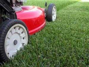 Основы ухода за газонной травой – не забываем удобрять