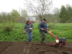 Фото удобрения огорода весной, tumentoday.ru