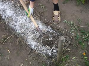 На фото - внесение минеральных удобрений весной, liveinternet.ru