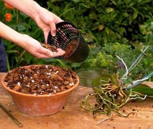 На фото - замена субстрата орхидеи, flowrum.ru