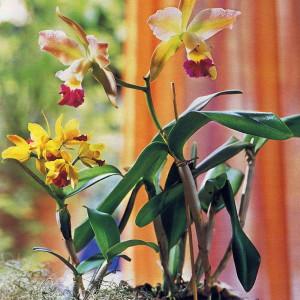 Фото орхидеи под солнечными лучами, flowers.cveti-sadi.ru
