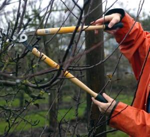 Фото про уход за садом весной, media.oregonlive.com/