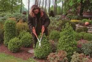 Фото про то, как ухаживать за садом весной, sad.ledybiznes.ru/