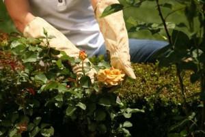 На фото - уход за садом весной, vipterra.ru