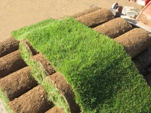 Укладка рулонного газона своими руками – экономим деньги