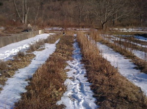 Фото снега на садовом участке, vsaduiogorode.ru