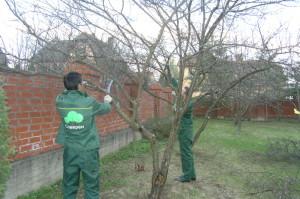 Фото обрезки плодовых деревьев ранней весной, soweren.ru