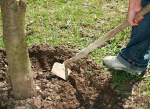 Фото перекапывания почвы в саду весной, freeadvice.ru