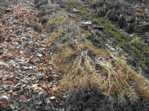 Сад  и огород осенью – защищаем от мороза