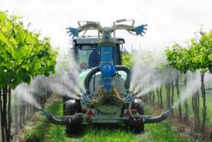 На фото - опрыскивание винограда сероуглеродом от филлоксеры, agro-sistema.ru