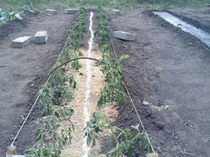 Фото фосфорной подкормки растений, legom.info