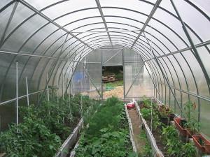 На фото - выращивание овощей в теплице, parnik-teplitsa.ru