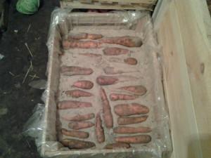 Прочие способы хранения моркови