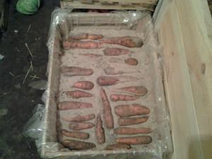 Храним морковь в погребе фото