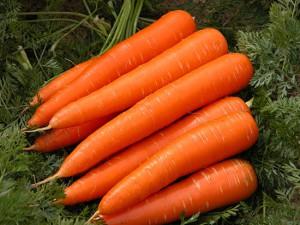 Фото здоровых и сочных корнеплодов моркови, good-tips.pro
