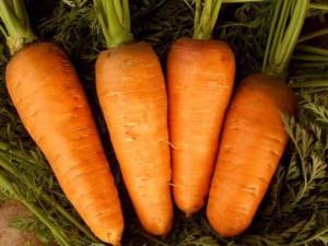 На фото - сорт моркови Шантанэ для хранения в холодильнике, nourriture.ru