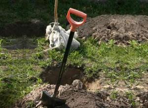 На фото - внесение питательных веществ в яму под саженец вишни, supersadovnik.ru